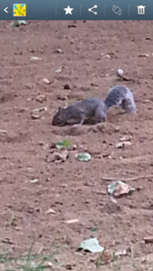 a squirrel in hyde park for Juzzy