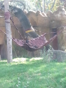 you can't tell but this happy orangutan was hanging out with her little orangutans