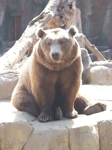 this brown bear was looking at us like we were the ones in the zoo, which I suppose we were ;)