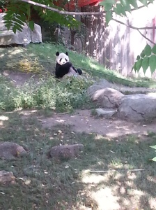 here Bing Xing eating